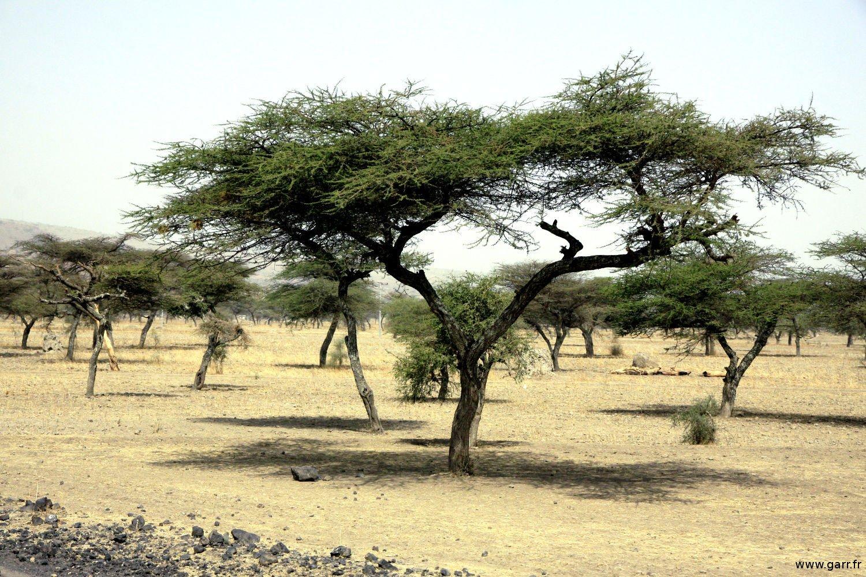 ethiopie-ziway-02-www-garr_-fr_