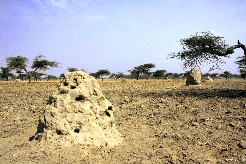 ethiopie-ziway-03-www-garr_-fr_