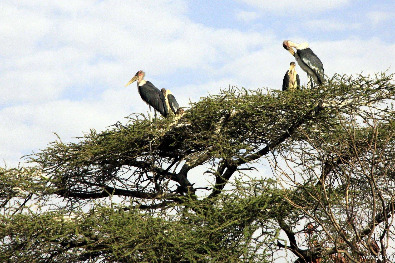 ethiopie-ziway-04-www-garr_-fr_