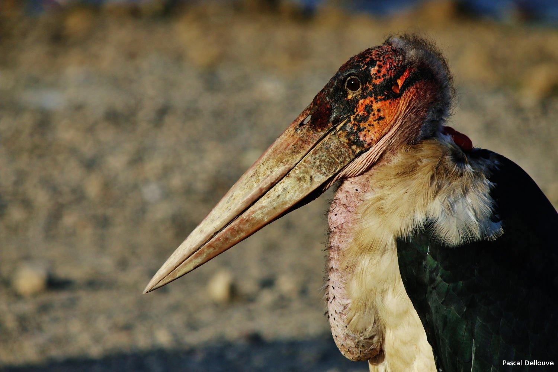 ethiopie-ziway-07-pascal-dellouve