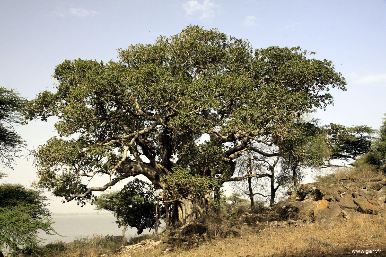 ethiopie-ziway-26-www-garr_-fr_