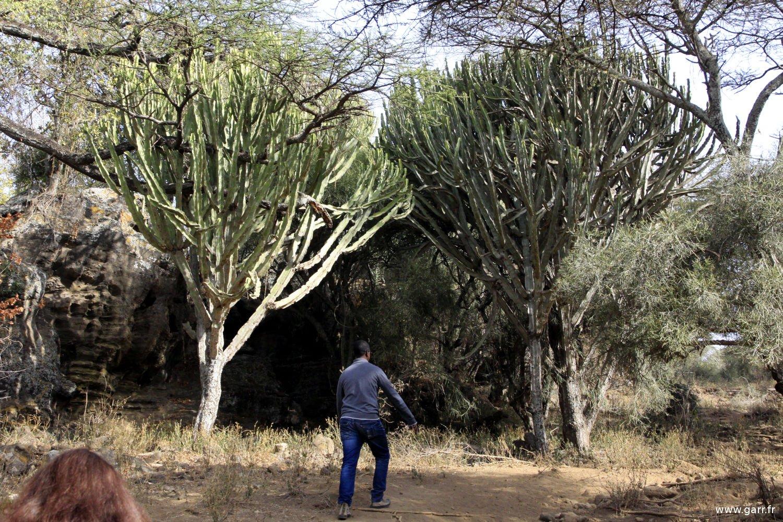 ethiopie-ziway-36-www-garr_-fr_