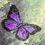 Un papillon vole
